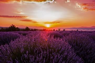 Lavender fields in sunrise, Isparta Turkey