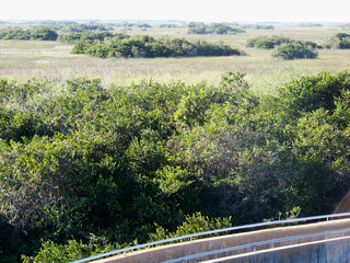 Tram Road Trail to Shark Valley Observation Tower in Everglades National Park in Florida