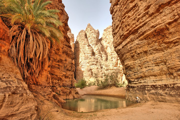 Oaza w wąwozie  zwana guelta na Saharze w Algierii