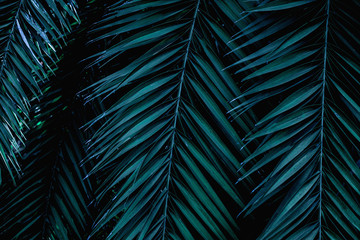 Wall Mural - tropical green palm leaf and shadow, abstract natural background, dark tone
