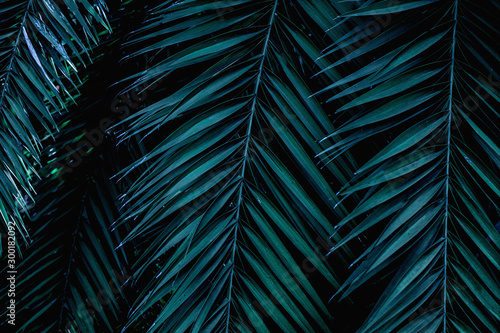 Wall mural tropical green palm leaf and shadow, abstract natural background, dark tone