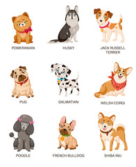 Cute puppies. Funny dogs of different breeds. Cartoon pomeranian, husky and terrier, pug and poodle, bulldog and dalmatian vector character