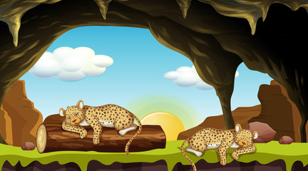 Scene with two cheetahs sleeping in cave