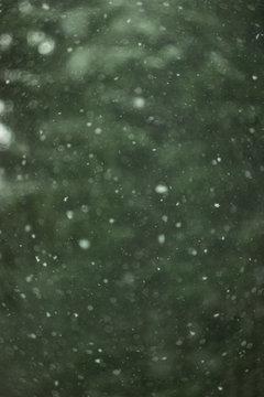 snow bokeh on green christmas tree background