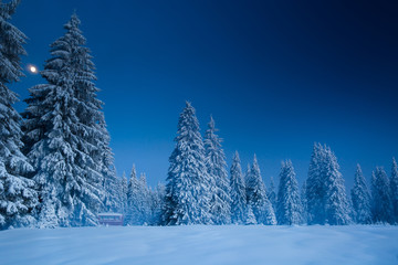 Majestic winter landscape with snowy fir trees. Winter postcard.