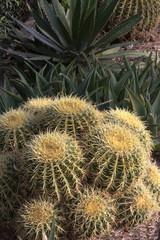 Desert cactus and succulents in vertical photograph