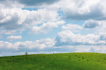 grassy meadow in dappled light beneath a cloudy sky. wonderful sunny weather in springtime. beautiful countryside landscape with pasture on the hill