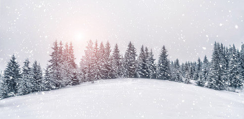 Beautiful sunset at winter mountains landscape. Vivid white spruces on a snowy day.  Alpine ski...