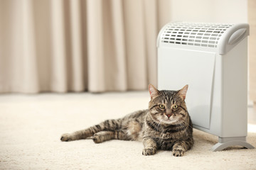 Cute tabby cat near electric heater at home. Space for text