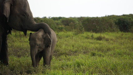 Tuinposter Olifant elephant in the wild