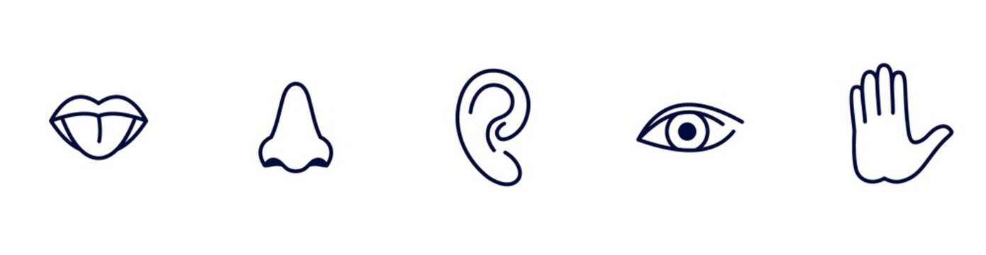 five senses icons, taste, hearing, sight, smell and touch illustration