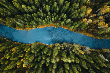 Aerial view of river passing through pine forest