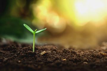 Obraz Plant growth on the soil - fototapety do salonu