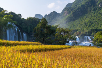 Ban Gioc waterfall with rice field in harvest time in Cao Bang, Vietnam