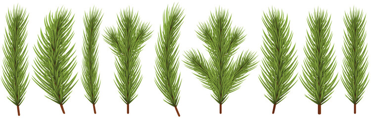 fir branch collection for christmas designs Wall mural