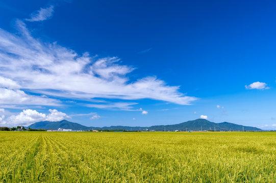 【新潟県新潟市】越後平野の水田と弥彦山、角田山