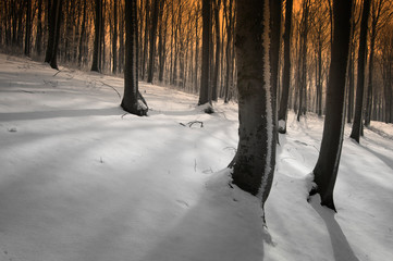 shadows on snow in a forest on a winter evening