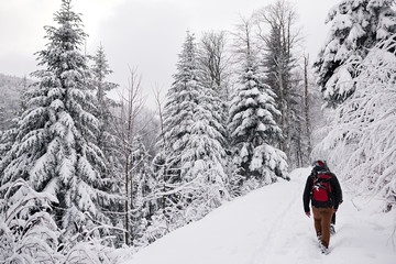 Fototapete - Couple hiking along a snow covered forest path in winter