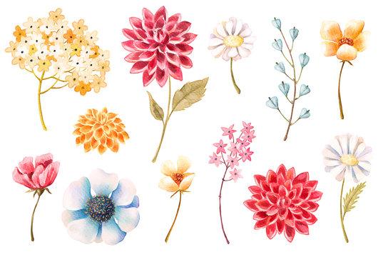 Watercolor flowers, leaves, plants, herbs set