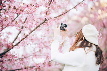 Happy travel woman and take a photo of sakura cherry blossoms tree on vacation while spring, asian
