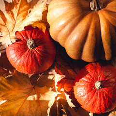Autumn composition of pumpkins and yellow leaves. Stock photo of pumpkins on dry leaves.