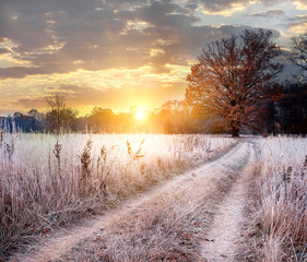 Spoed Foto op Canvas Lavendel Transitional season of autumn to winter. A dirt road among plants in white hoarfrost leading to a mighty oak tree in golden leaves at dawn.
