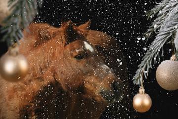 Pony vor Weihnachtskugeln Wall mural