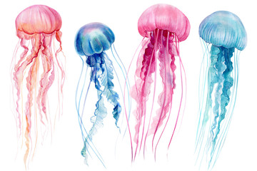 set of jellyfish on an isolated white background, watercolor illustration, hand drawing