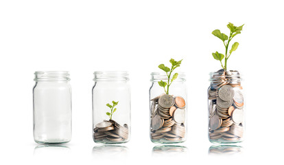 Obraz Money coins and tree growing in jar. Profit on deposit in bank and dividend for stock investment concept. - fototapety do salonu
