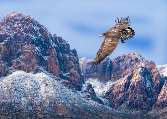 Poster Eagle Bald Eagle Juvenile Over Snow-Dusted Mountains...Some Native Peoples Believe the Eagle can Take Your Dreams to Heaven