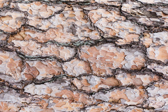Grunge old tree bark brown wood texture. Natural forest pattern background.