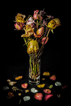 Bouquet of Wilted Roses on Black Background.