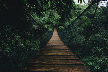 Wall Murals Road in forest Wooden suspended bridge in a forest
