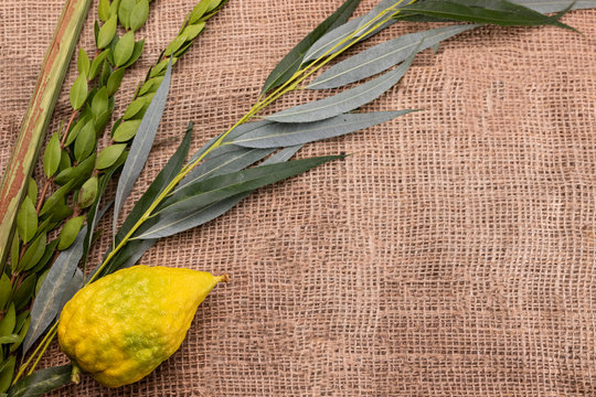 Horizontal composition of Sukkot festival symbols: palm, willow, myrtle, etrog. Lulav on jute fabric. Banner with a copy space.