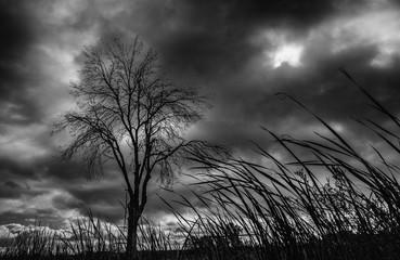 Imagen de invierno con un árbol a la izquierda y nubes de tormenta