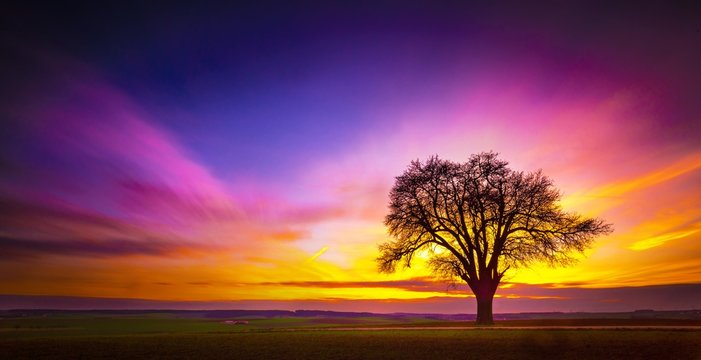 Beautiful tree on a grassy field with the breathtaking colorful sky in the background