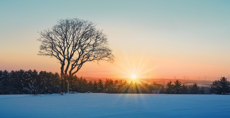 Spoed Foto op Canvas Beige Winter sunset over the snow covered tree.Nature background.