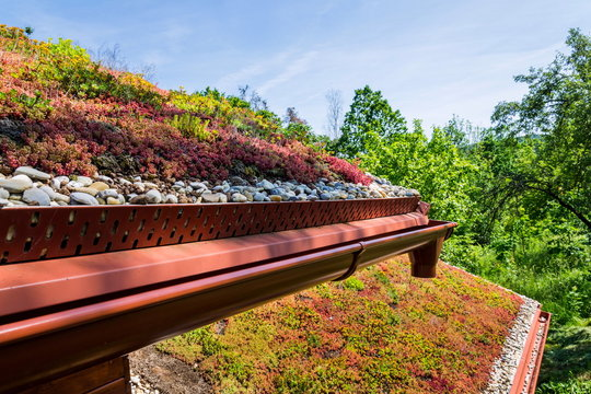 Extensive green ecological living sod roof covered with vegetation mostly sedum sexangulare, also known as tasteless stonecrop