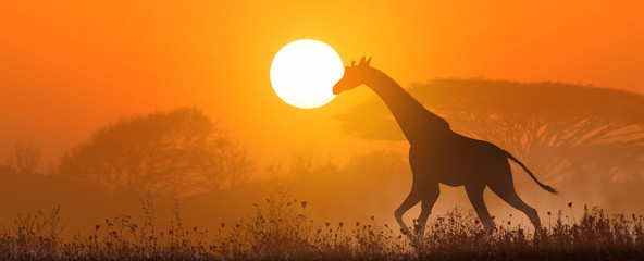 Photo sur Toile Orange eclat Running giraffe at sunset