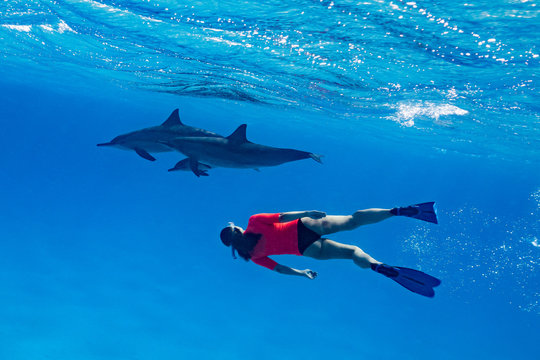 woman swimming with a pod of Spinner dolphins (Stenella longirorstris) over sand in Sataya reef, Egypt, Red Sea