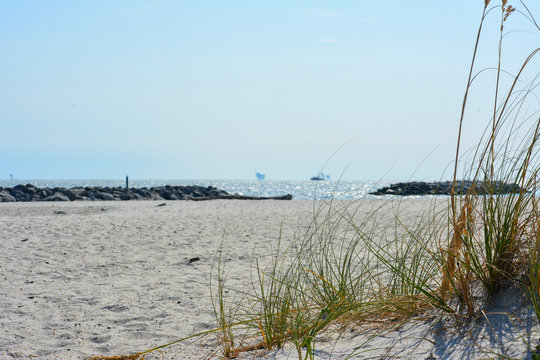 Dune grass growing on the beach on Dauphin Island, Alabama.
