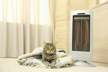 Cute tabby cat near electric infrared heater at home