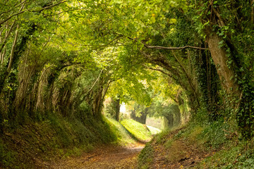 Wall Murals Road in forest Halnaker tree tunnel in West Sussex UK with sunlight shining in. This is an ancient road which follows the route of Stane Street, the old London to Chichester road.