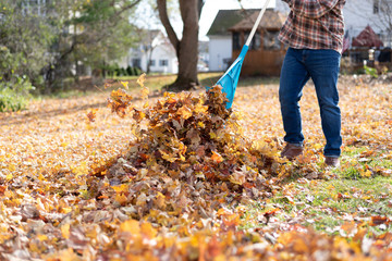 Man raking leaves in the backyard in autumn