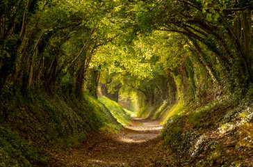 Papiers peints Route dans la forêt Halnaker tree tunnel in West Sussex UK with sunlight shining in. This is an ancient road which follows the route of Stane Street, the old London to Chichester road.