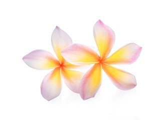 Photo sur Plexiglas Frangipanni Frangipani flower isolated on white background