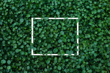 Green leaves pattern with white frame for nature concept,leaf Water Pennywort   plant