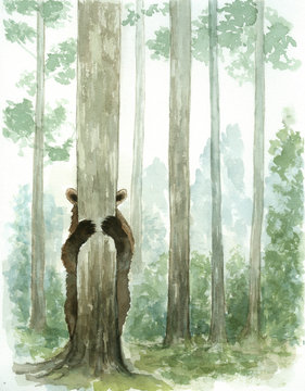 peekaboo bear in forest watercolor