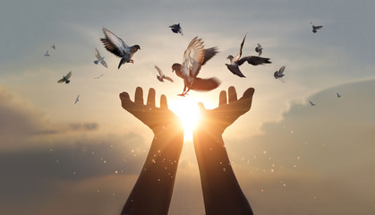 Zelfklevend Fotobehang Vogel Woman hands praying and free bird enjoying nature on sunset background, hope and faith concept