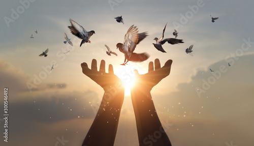 Leinwandbilder Woman hands praying and free bird enjoying nature on sunset background, hope and faith concept